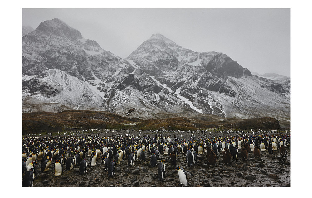 Antarctic_03.jpg