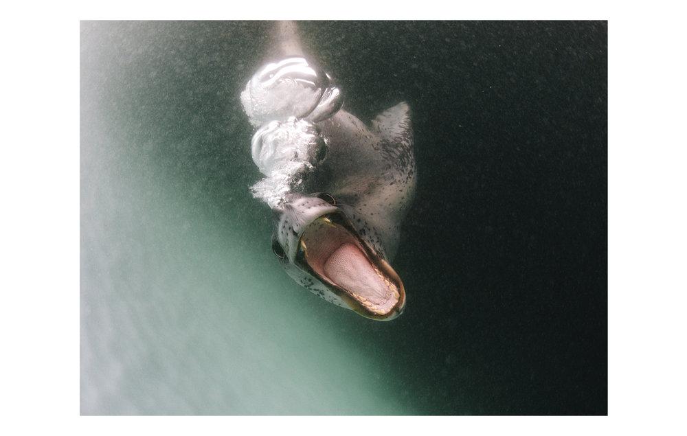 Antarctic_07.jpg