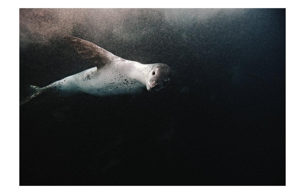 Antarctic_08.jpg