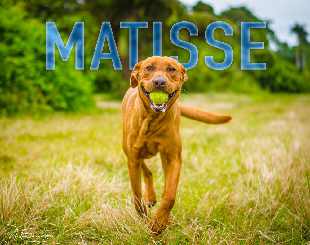 Matisse-Name-Web-1809.jpg