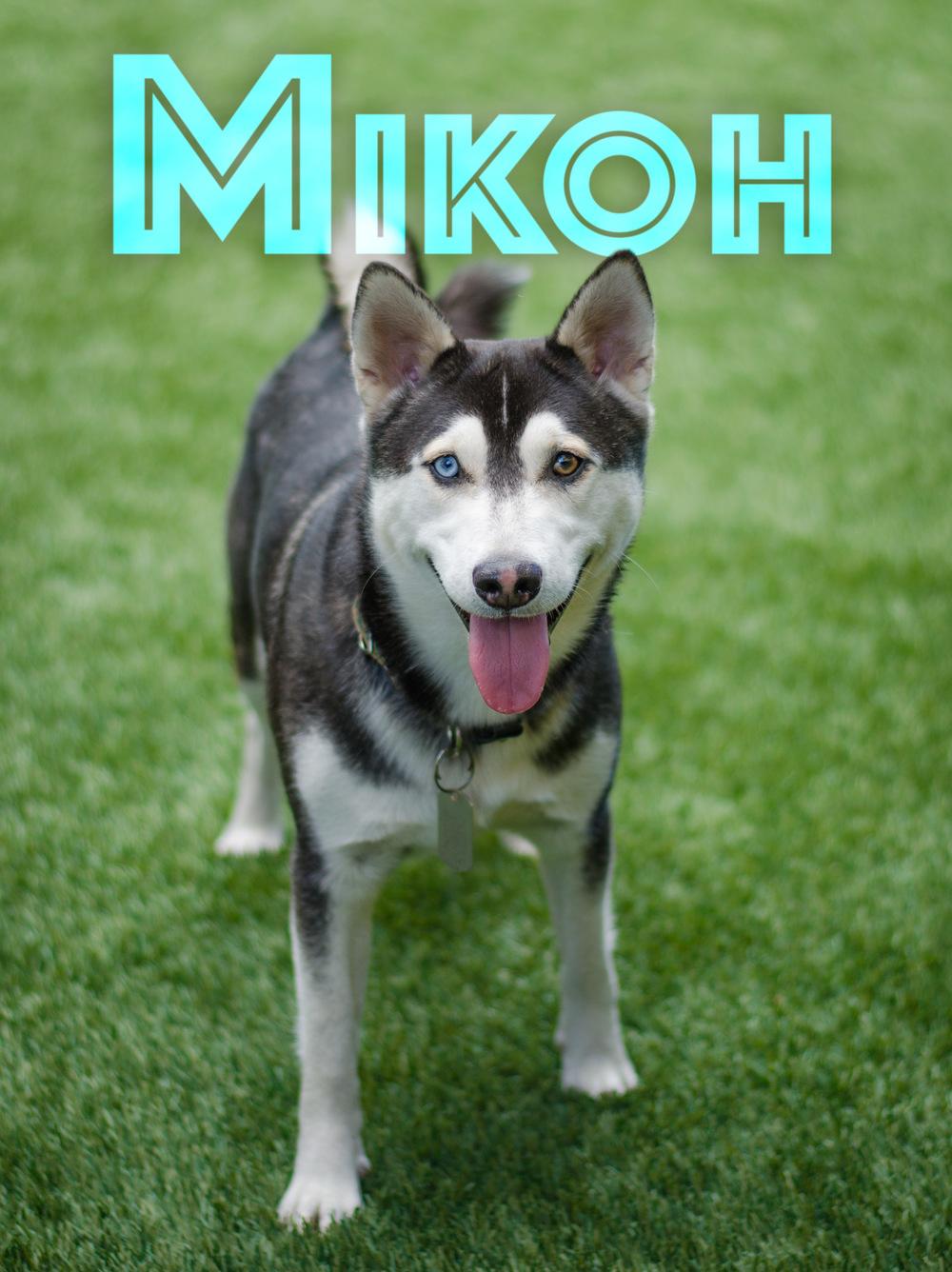 Mikoh-Name-Web-DSC_1527.jpg