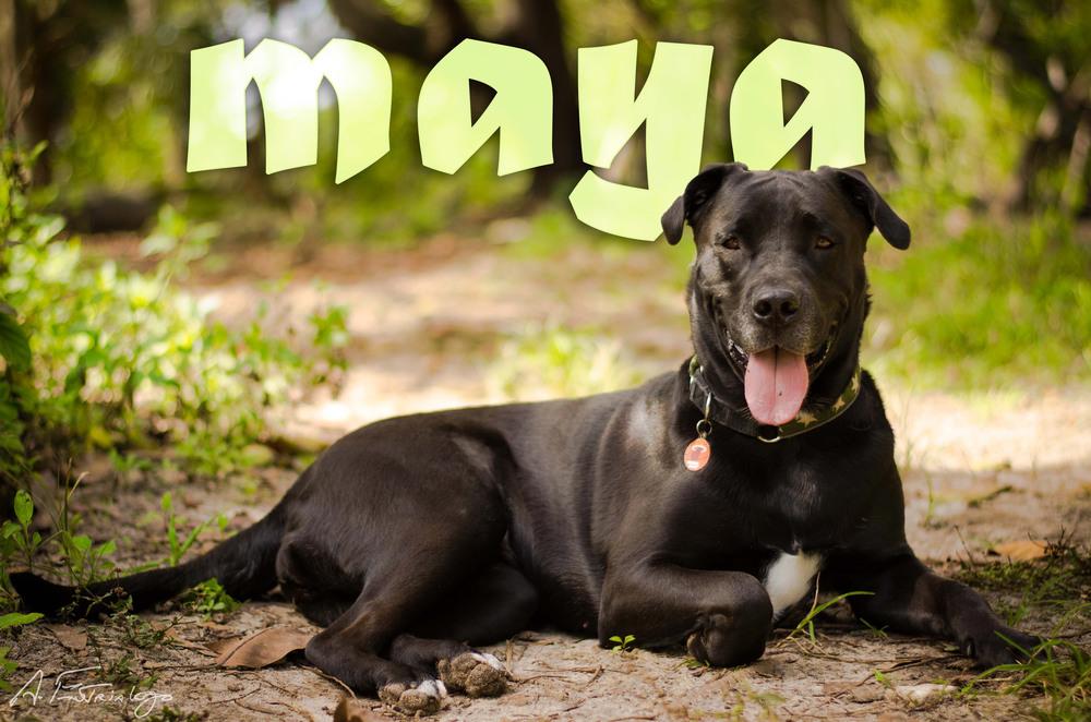 Maya-0721-text-web.jpg