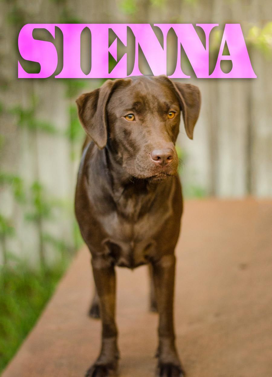 Sienna-Name-Web.jpg