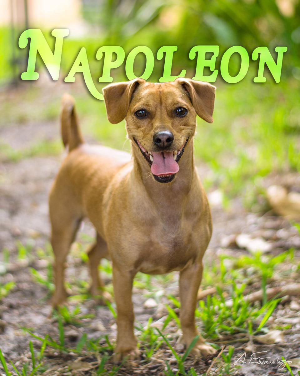 Napoleon-Web-Name.jpg