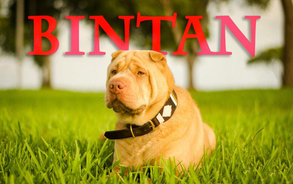 Bintan-Name-Web-6571.jpg
