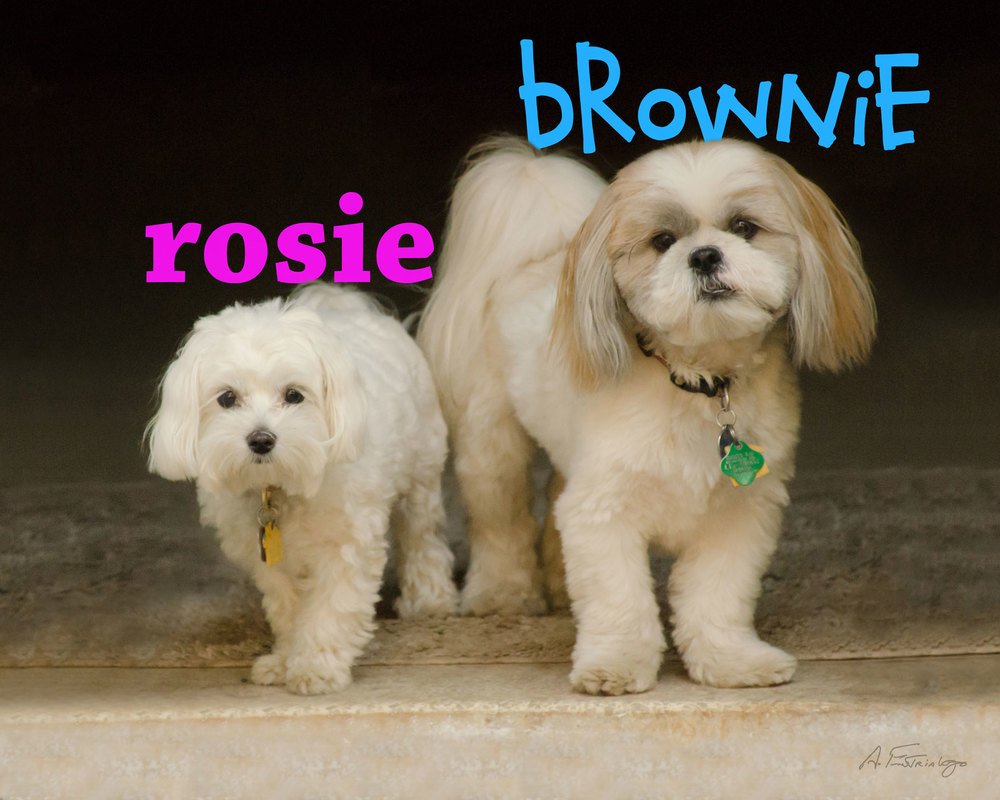 Brownie-Rosie-Name-Web-DSC_9394.jpg