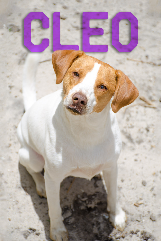 Cleo-Web-Name.jpg