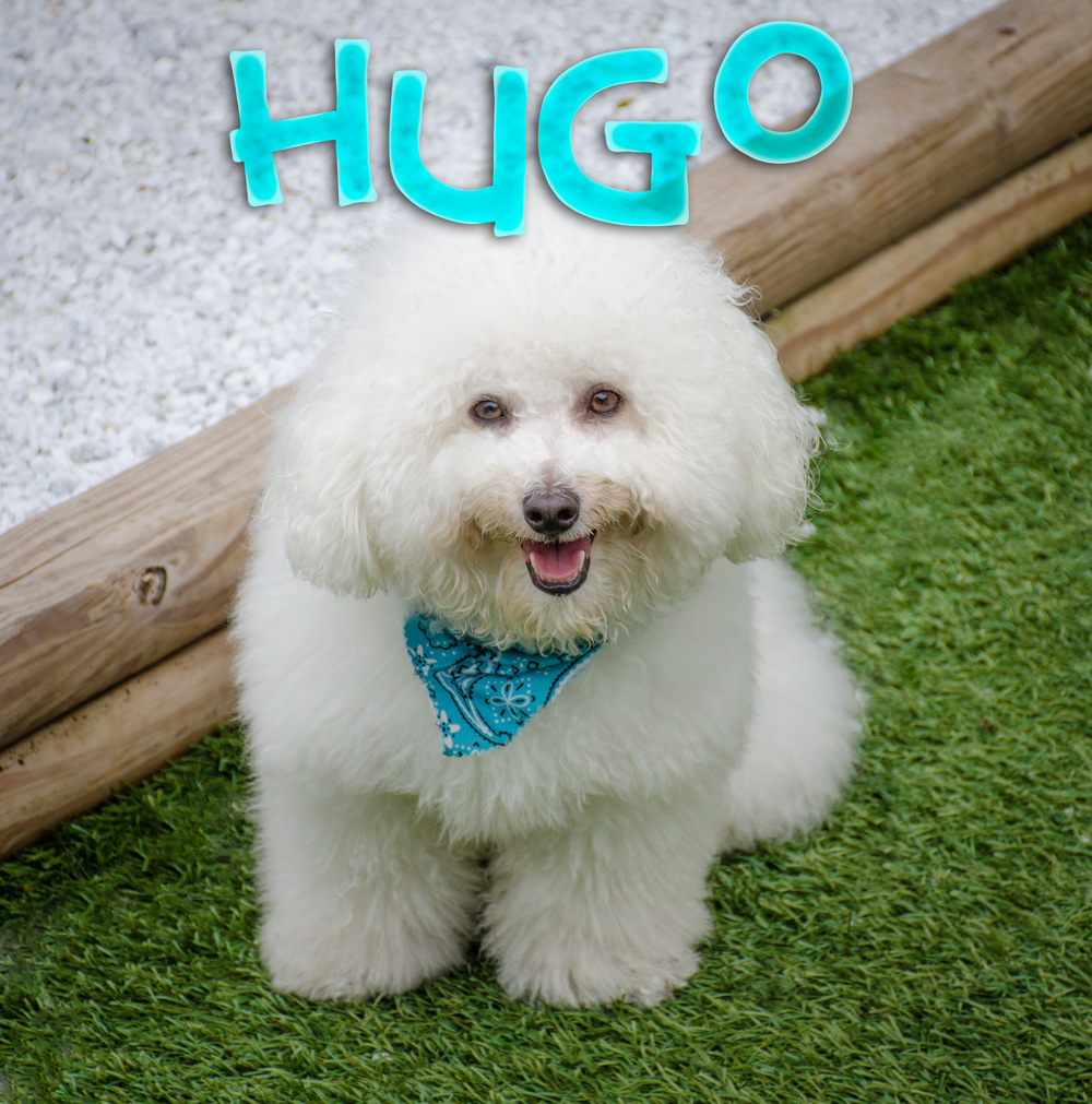 Hugo-Web-Name-DSC_2446-Edit.jpg