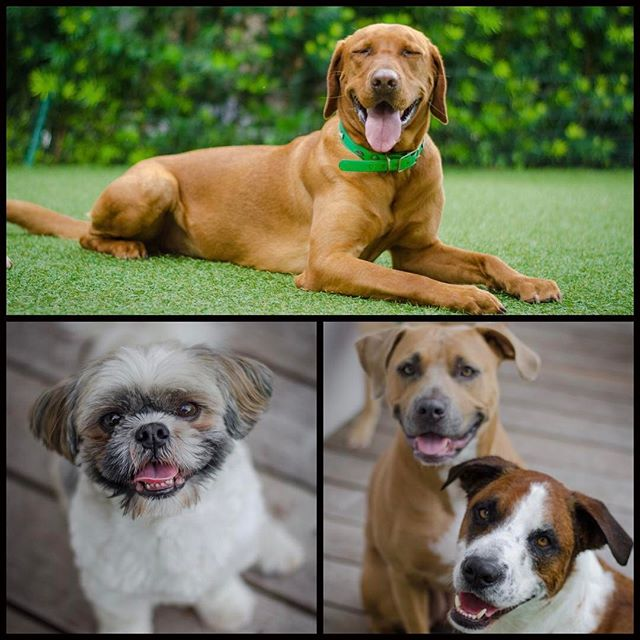 Happy Friday from the pups at #DoggieDojoMiami 😎🐶🐕😀