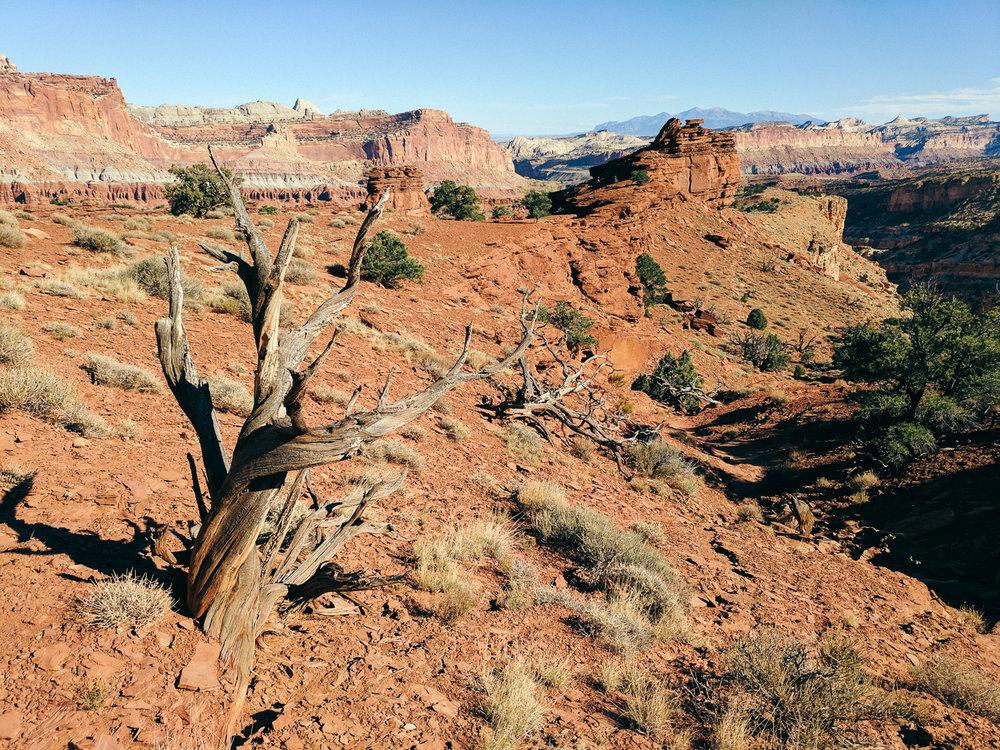 Desert juniper landscape Capitol Reef, Utah