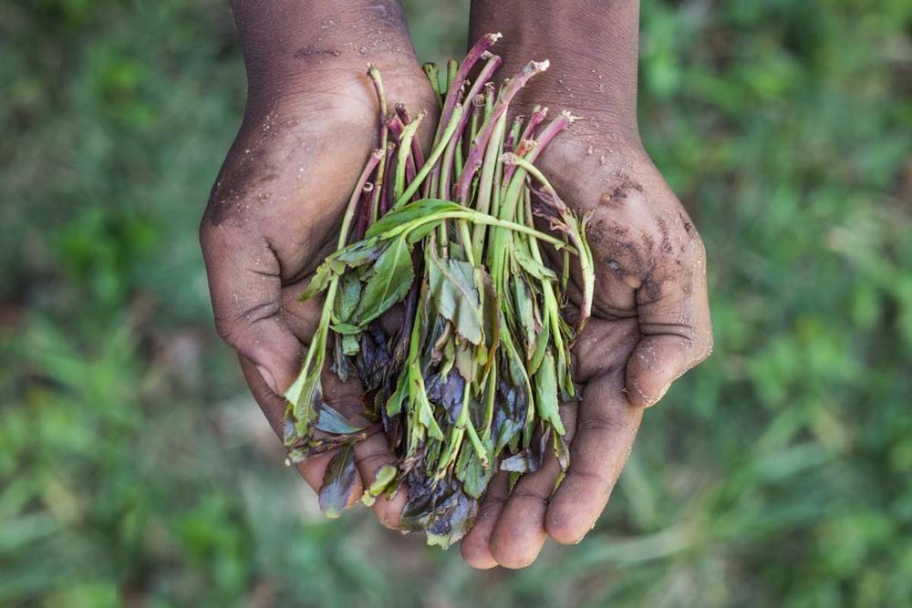 Mirrah Farming