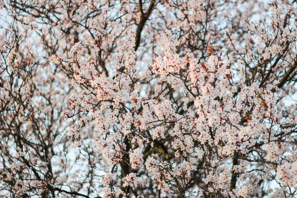 Spring in Bloom-2 copy.jpg