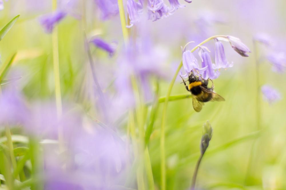 Spring in Bloom-2-2.jpg