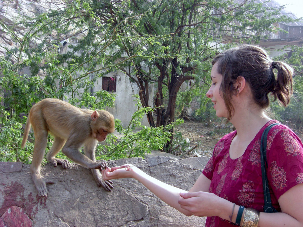 Feed a monkey • Jaipur, India •