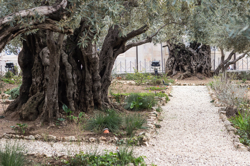 Jerusalem blog-1819.jpg