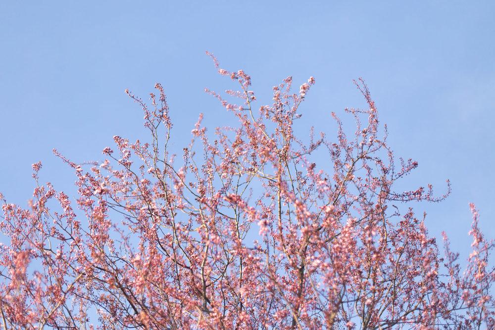Spring blog-6538.jpg