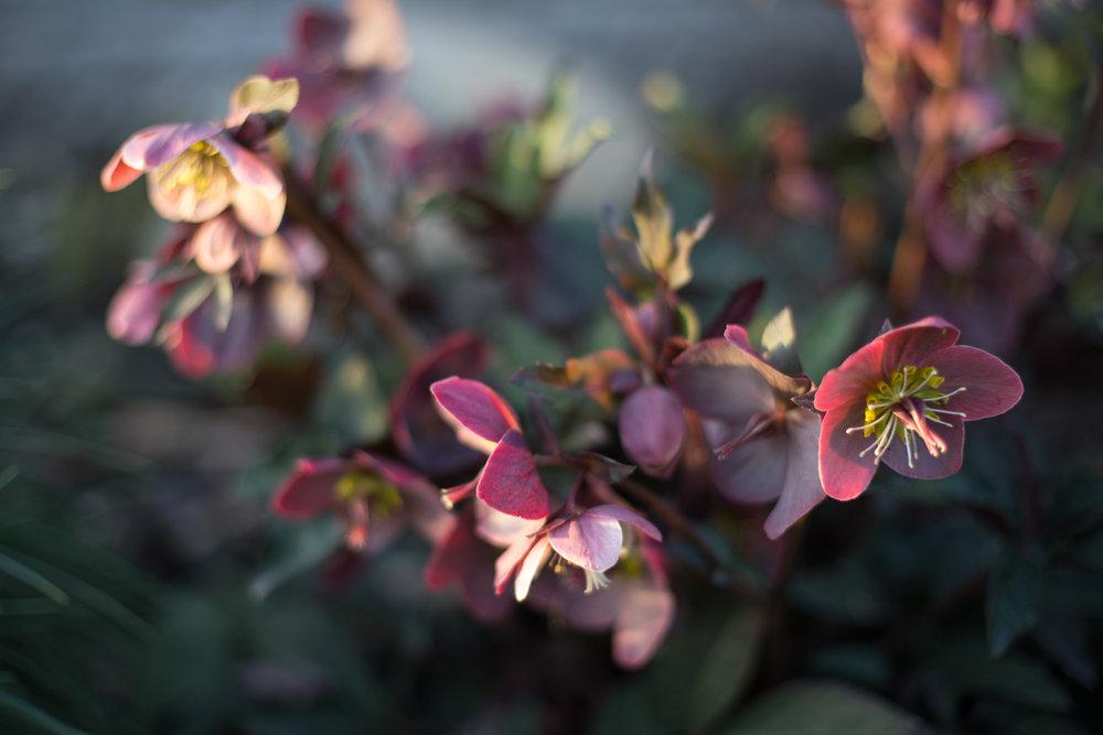Spring blog-6554.jpg