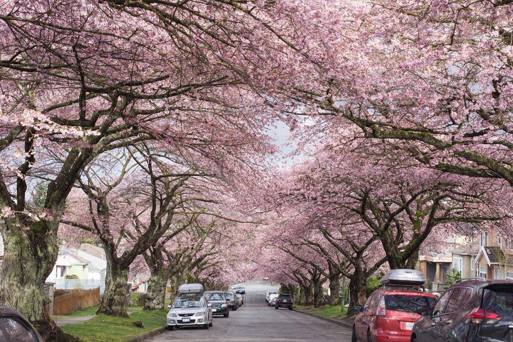 Spring blog-6580.jpg