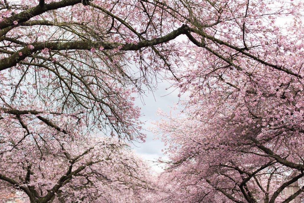 Spring blog-6590.jpg