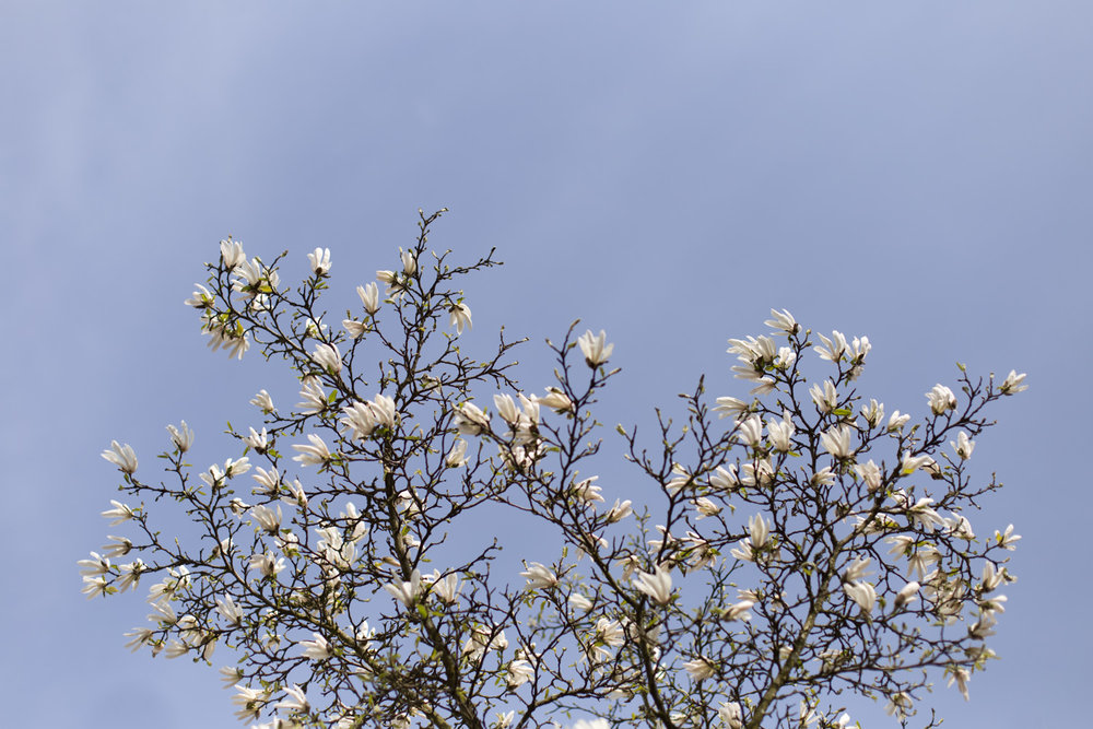 Spring blog-6610.jpg