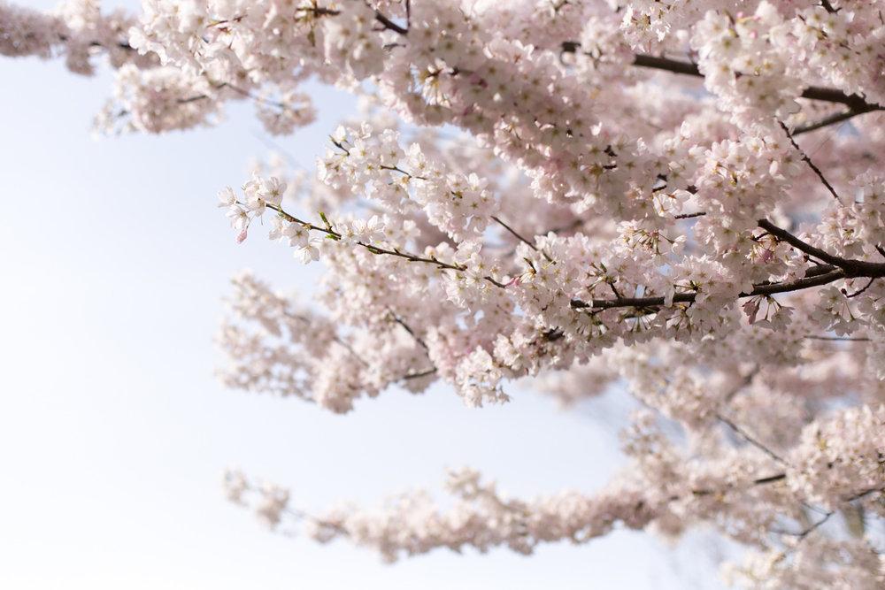 Spring blog-6617.jpg