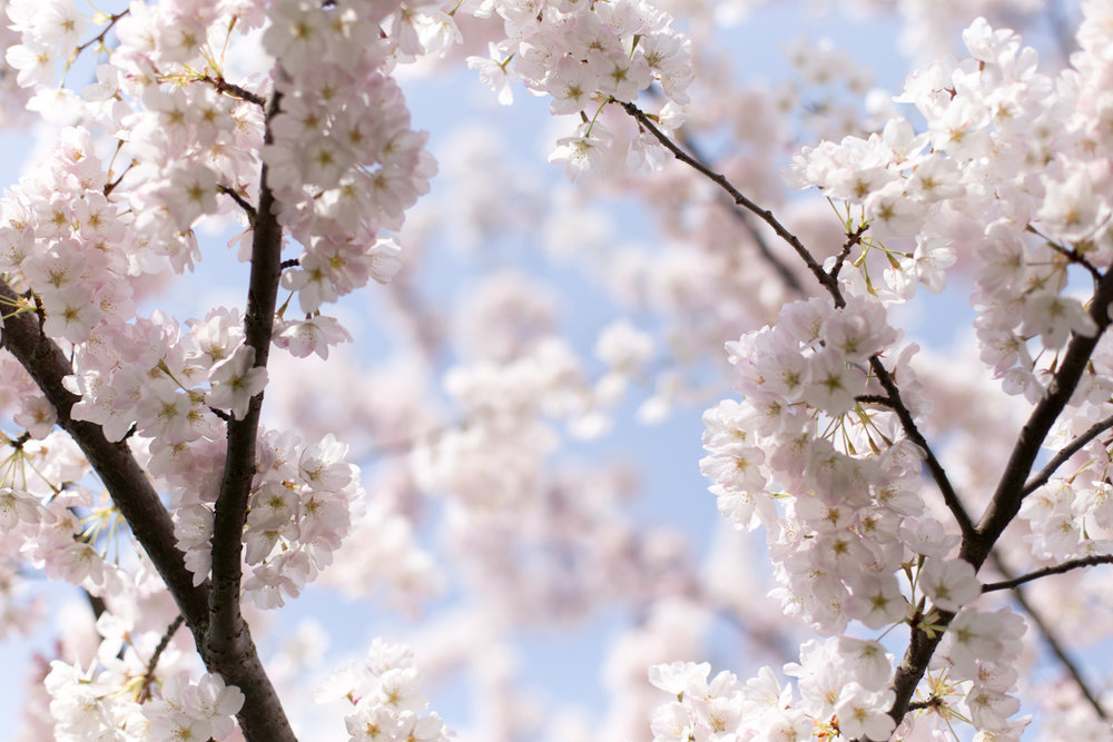 Spring blog-6620.jpg