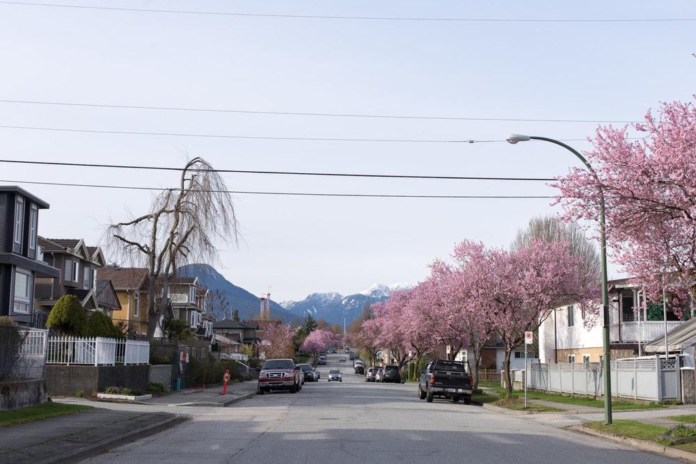 Spring blog-6642.jpg