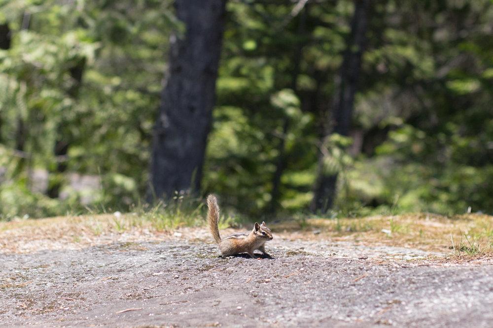 Squamish-Whistler-7737.jpg