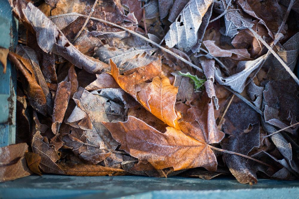 Whistler blog-0447-2.jpg