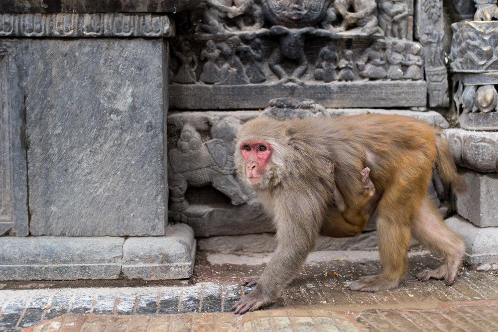 Nepal blog-3263.jpg