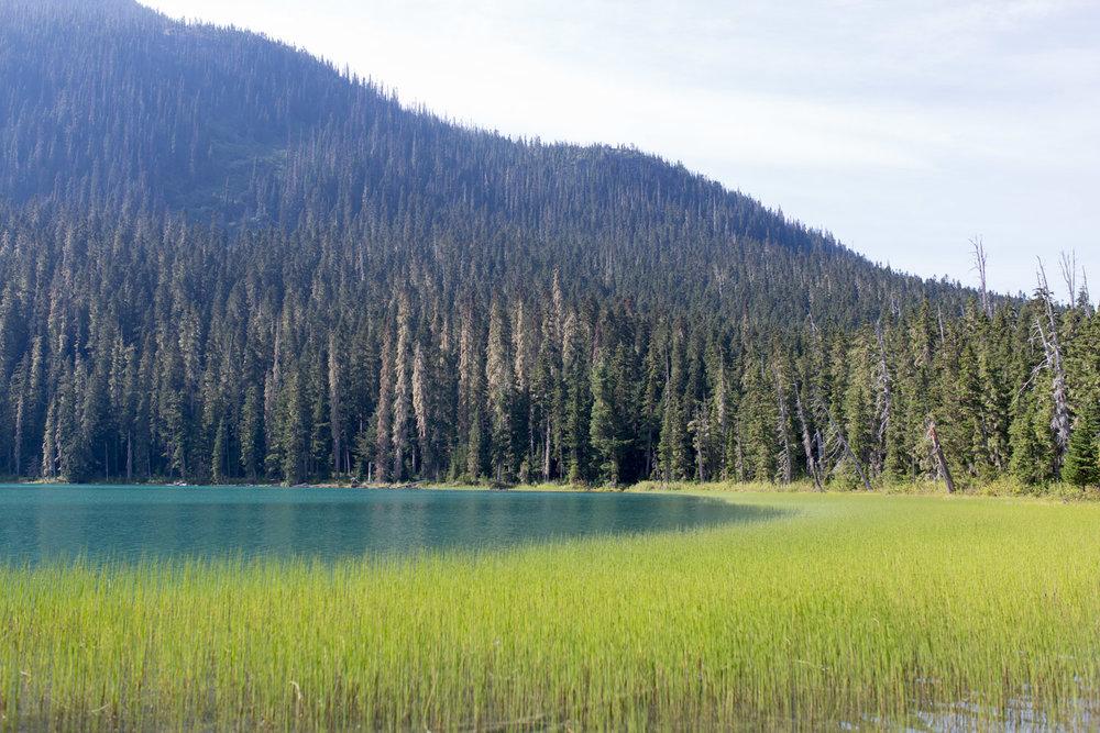 Joffre Lake hike-4059.jpg