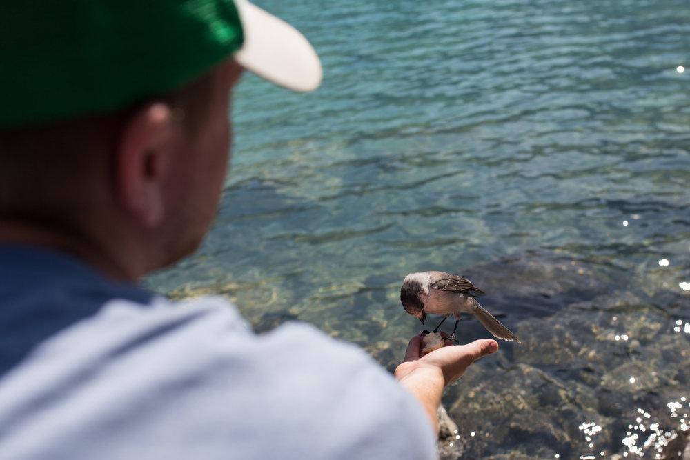 Joffre Lake hike-4136.jpg
