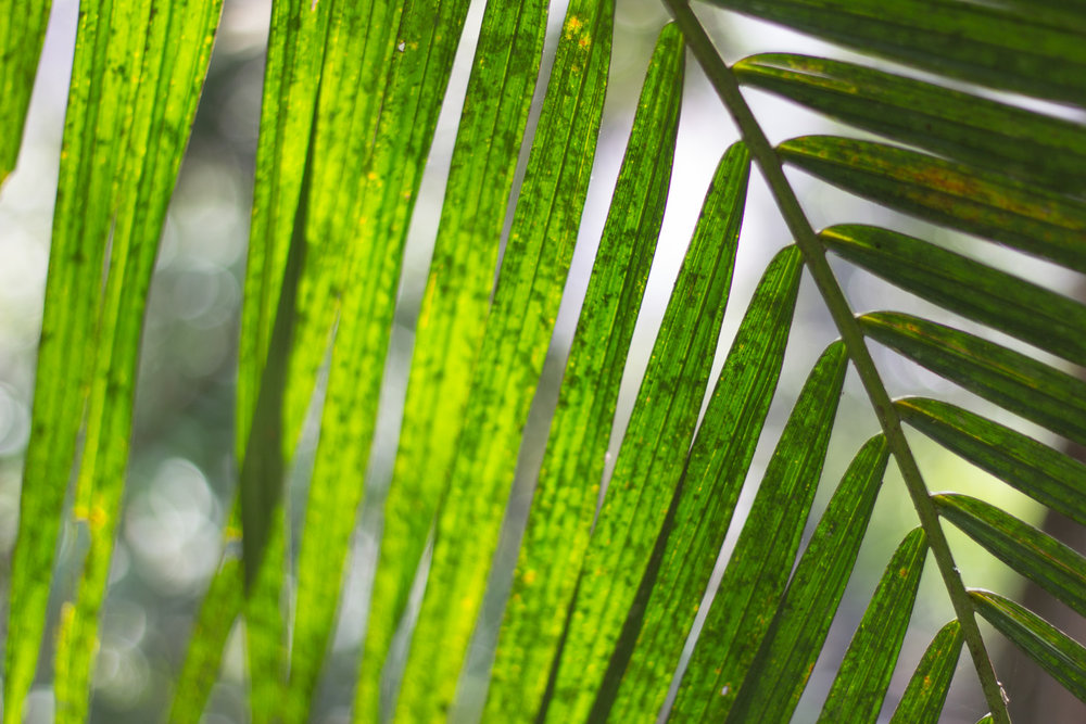 Wild Green blog-0336.jpg