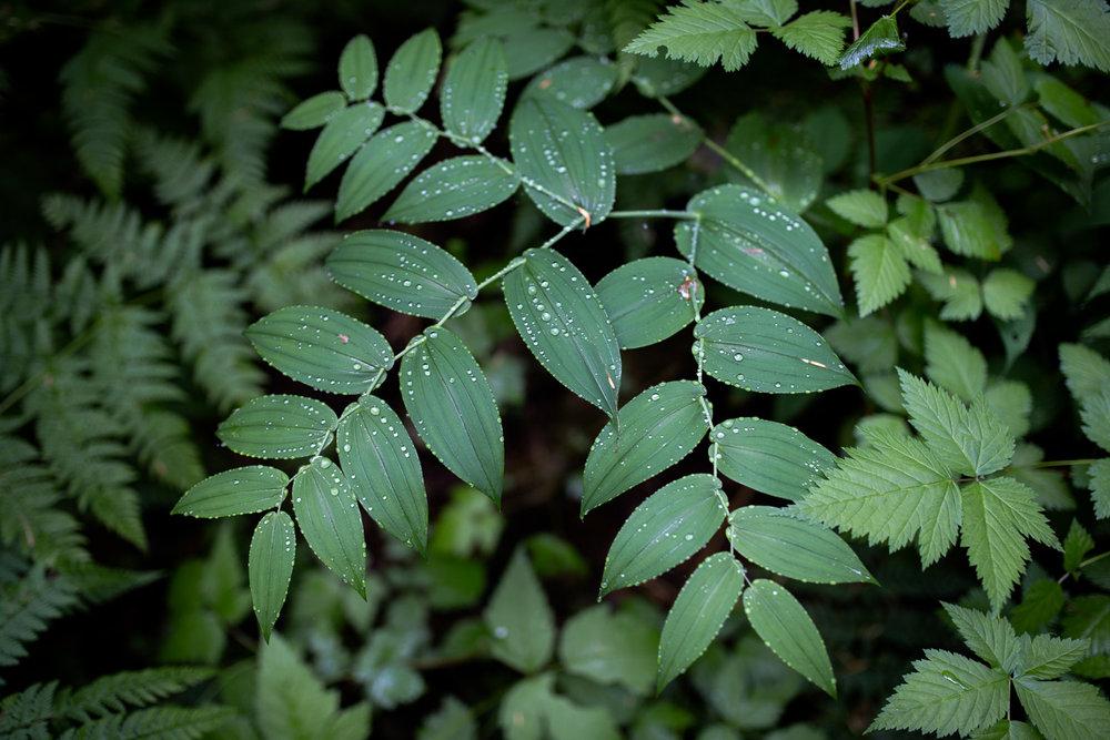 Wild Green blog-2973.jpg