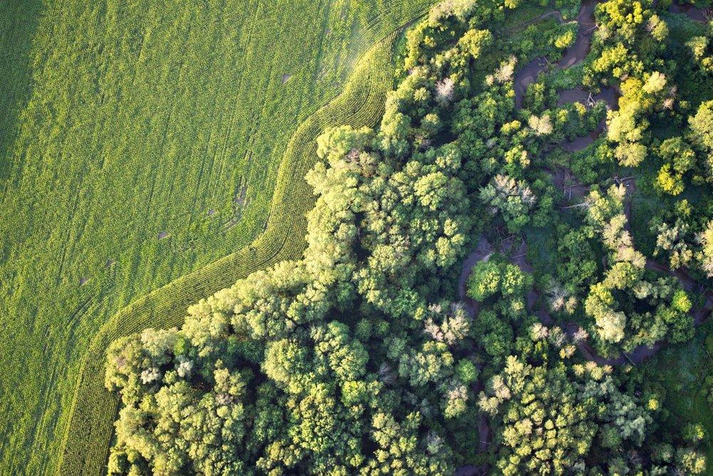 Wild Green blog-5481.jpg