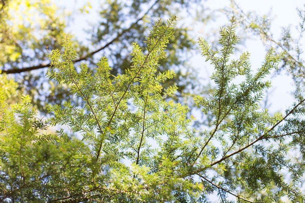 Wild Green blog-6871.jpg