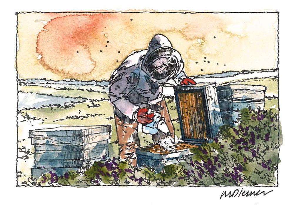 Western Planner Sketches_bees.jpg
