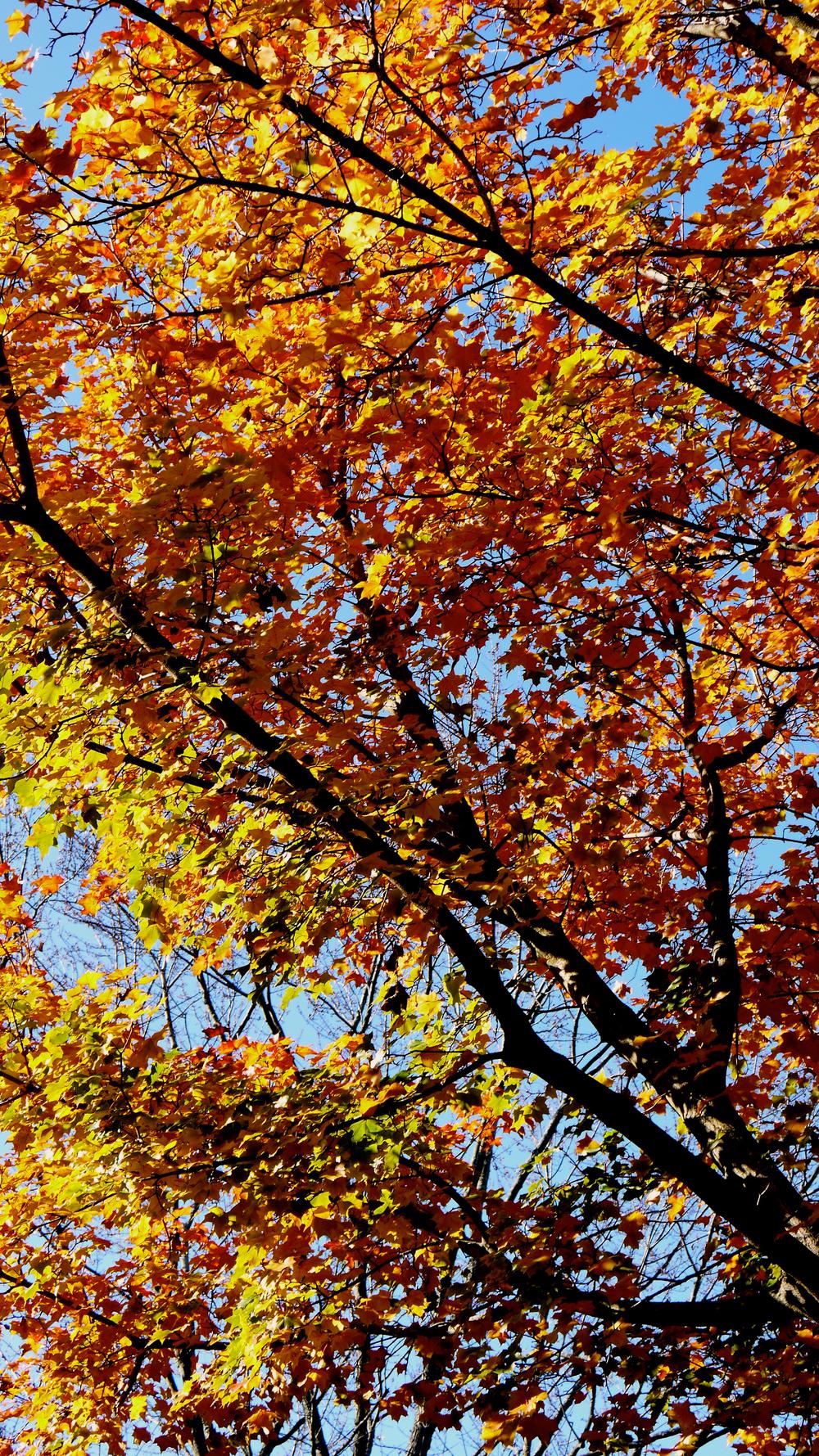 p1000359-leaves.jpg