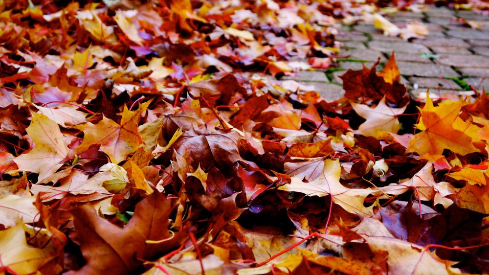 p1000362-leaves1.jpg
