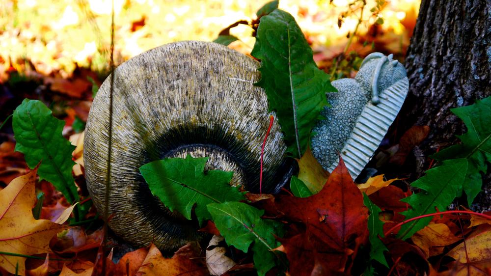 p1000364-snail.jpg
