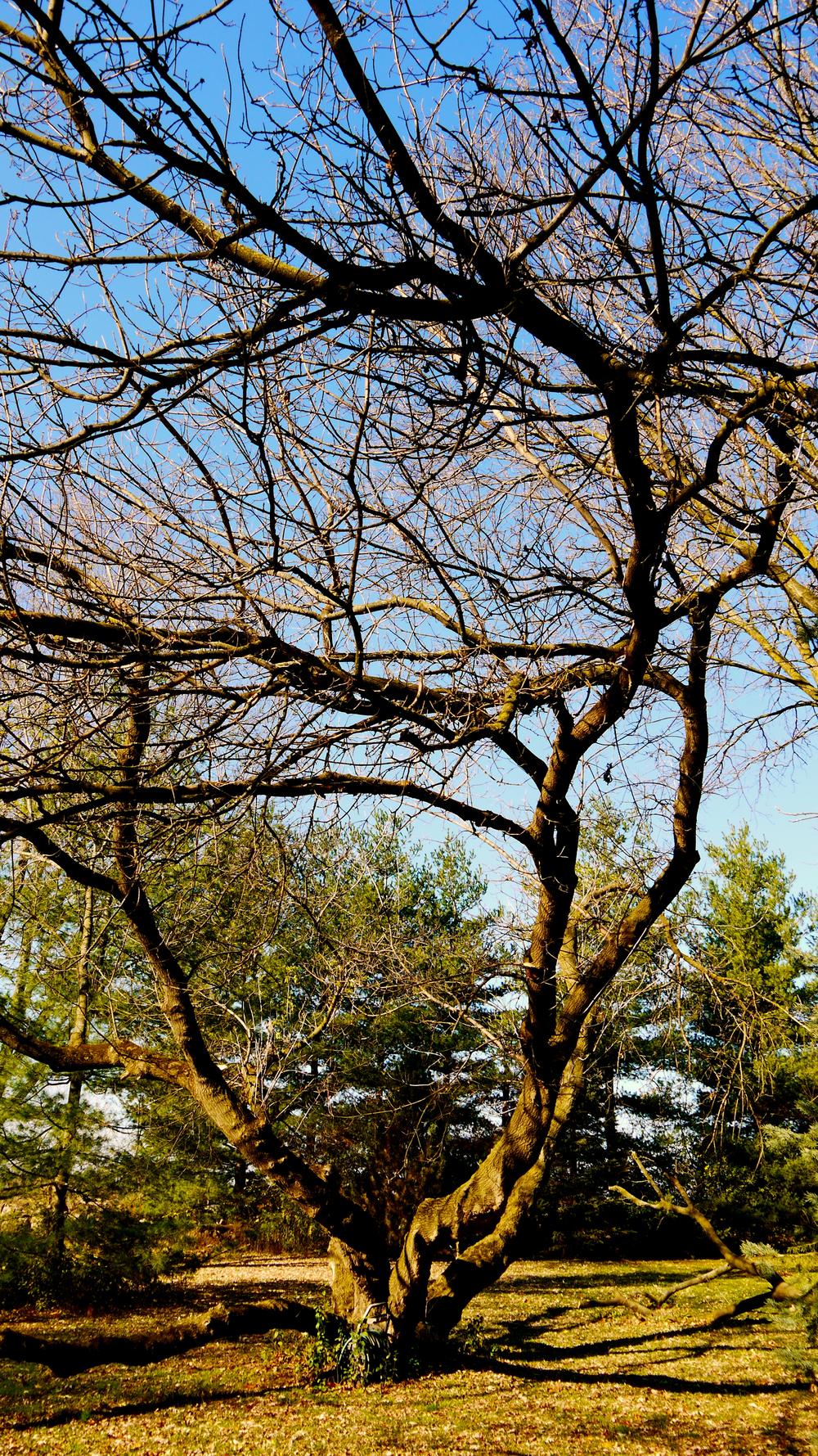 p1000378-palm-tree.jpg
