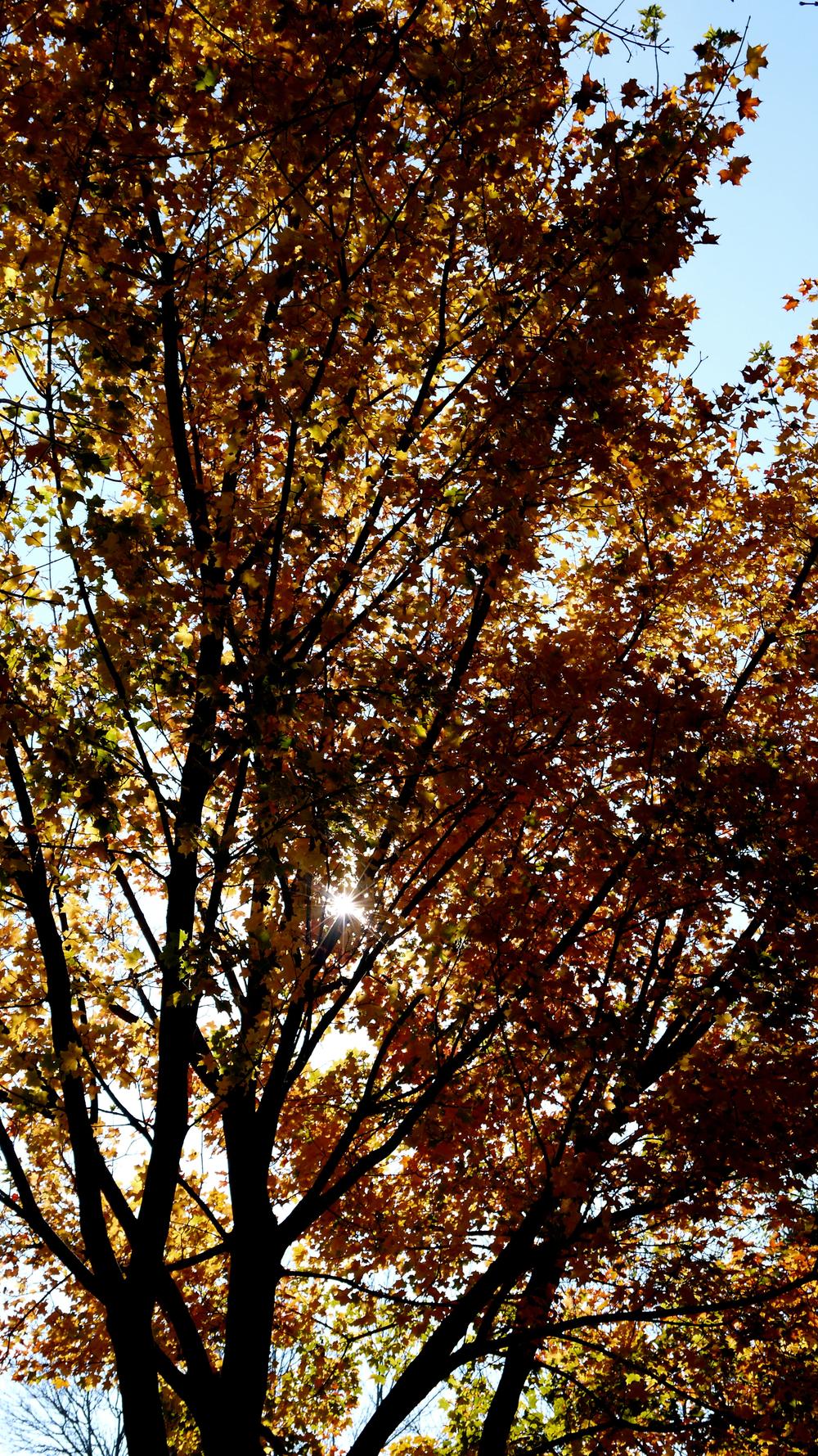 p1000411-tree.jpg