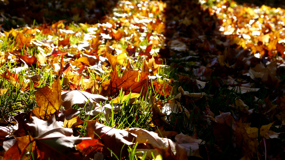 p1000413-leaves.jpg