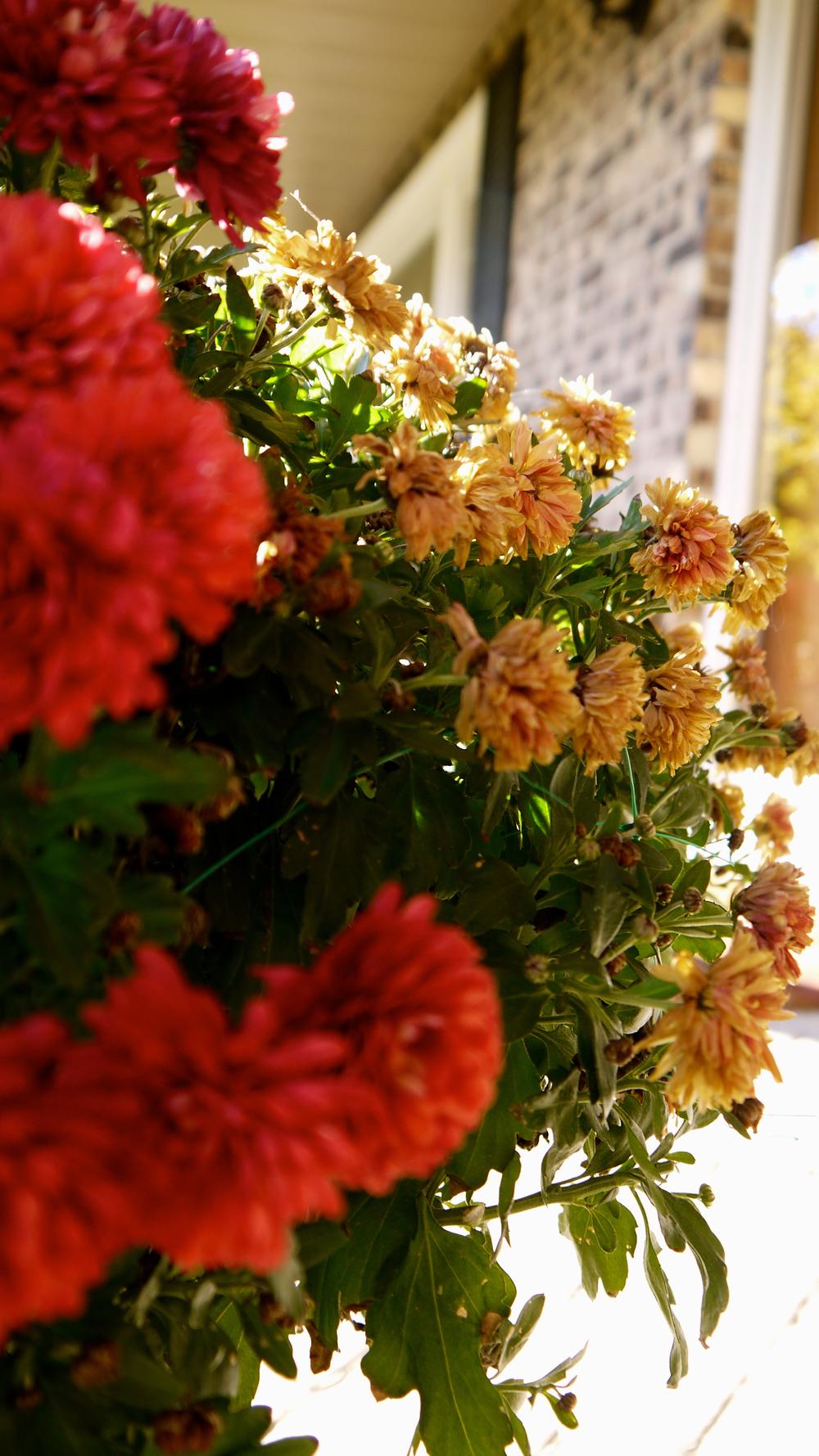 p1000458-flowers.jpg