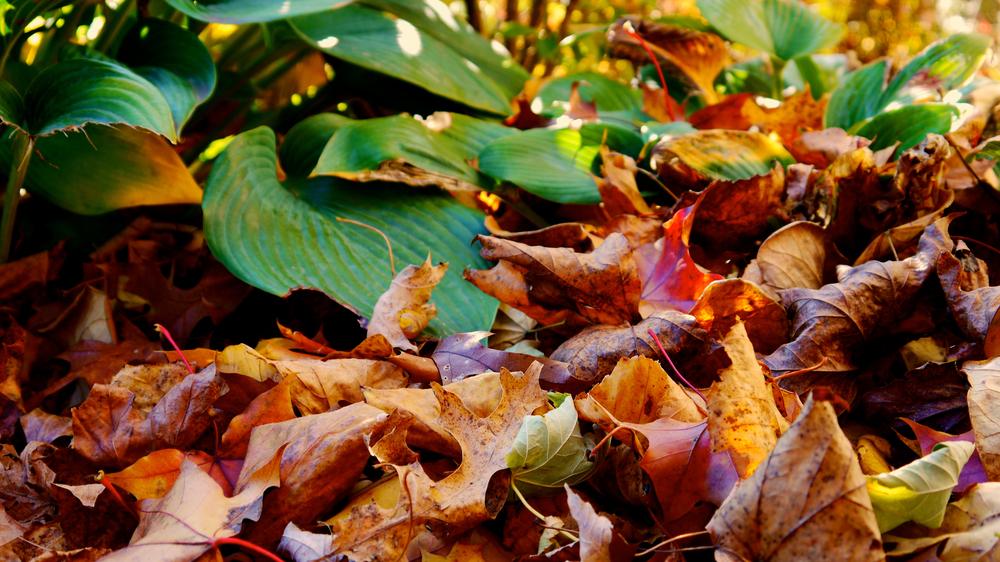 p1000466-leaves.jpg