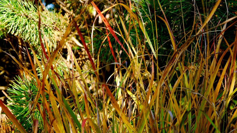 p1000473-grass.jpg