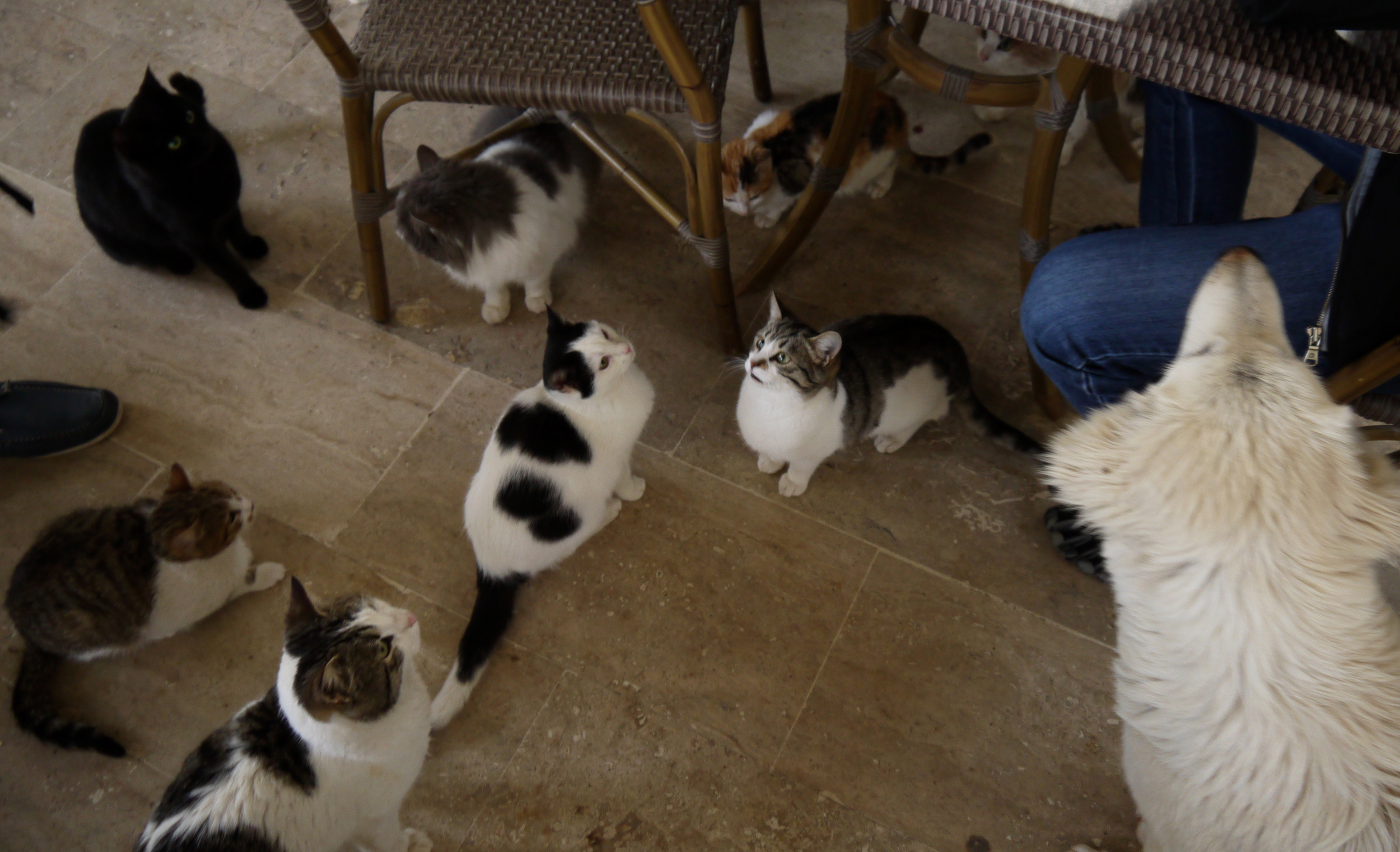 Figure 8. Cats and dogs waiting to be fed