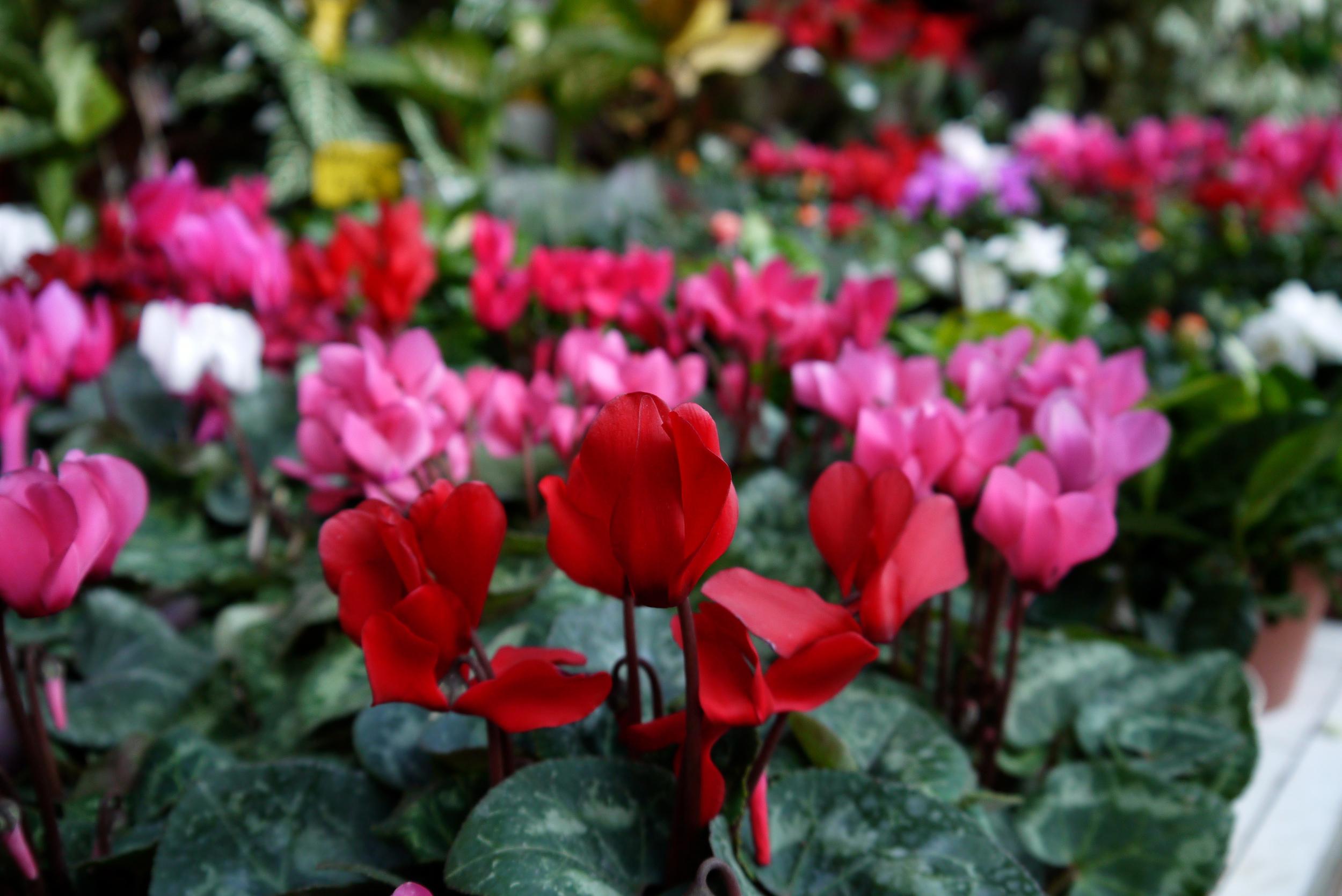 Figure 10. Vibrant flowers