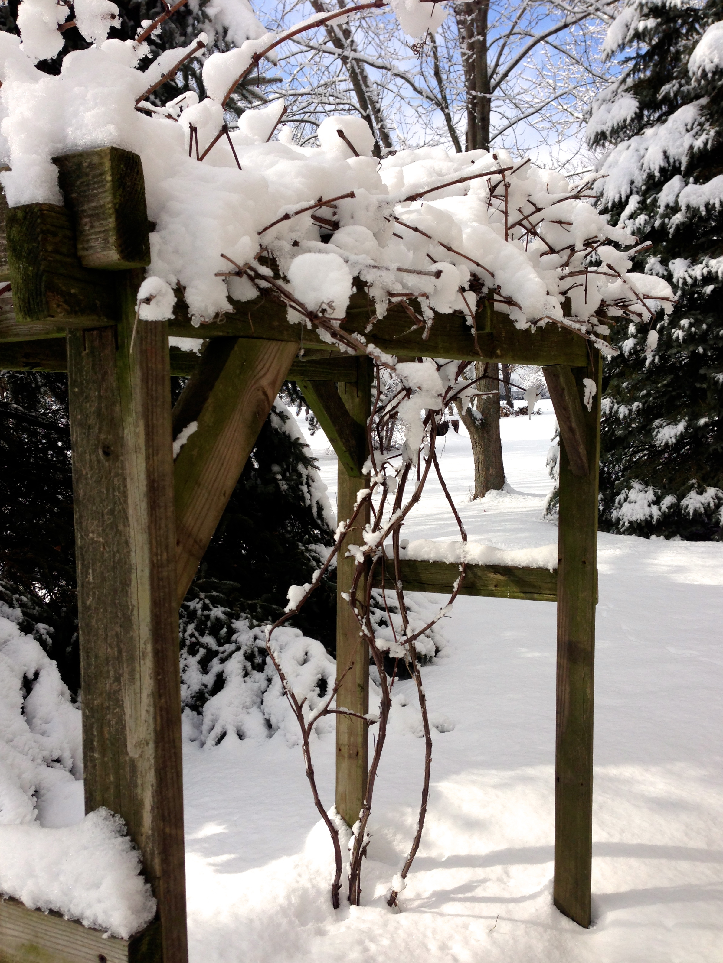 IMG_0806 snow