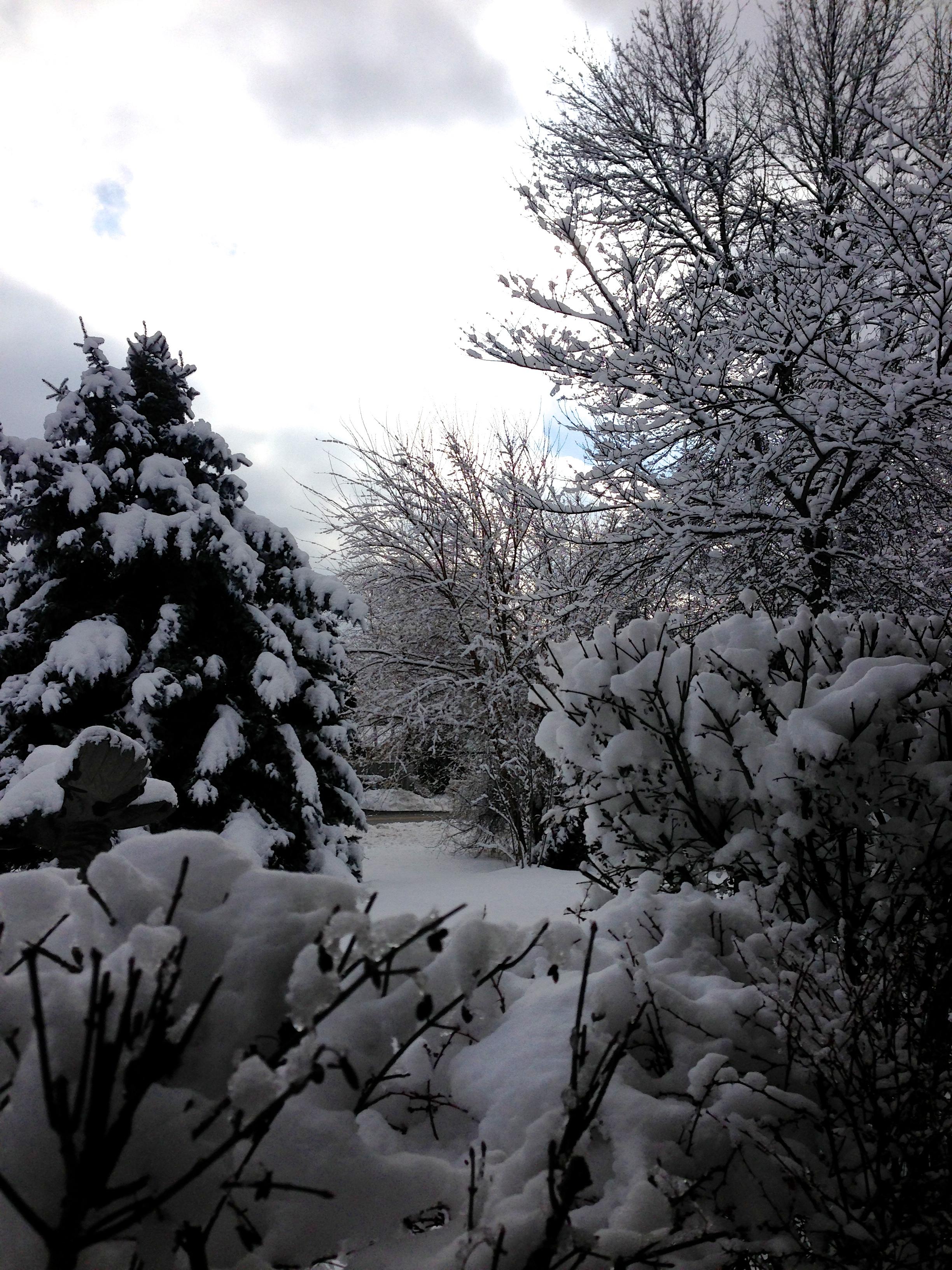 IMG_0814 Snow